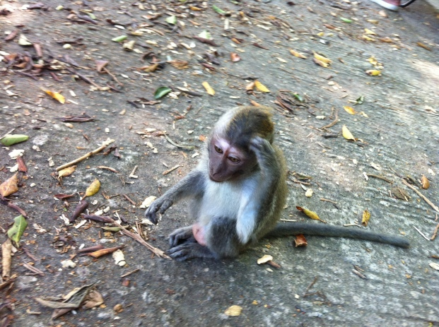 Monkey Lombok Indonesia